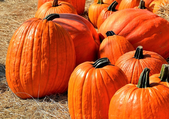 10 Sweet and Savory Pumpkin Recipes for Fall